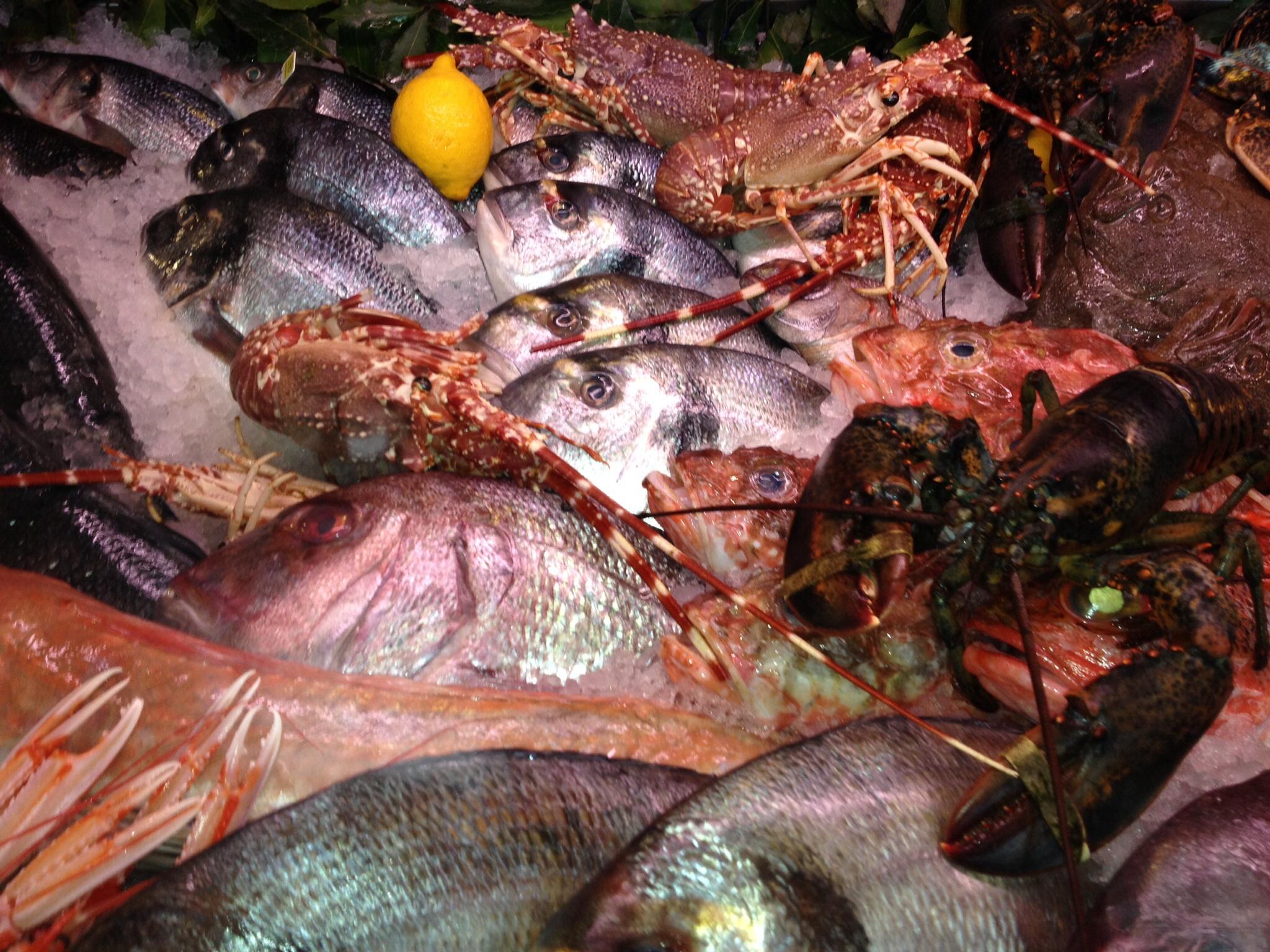 Fischvitrine